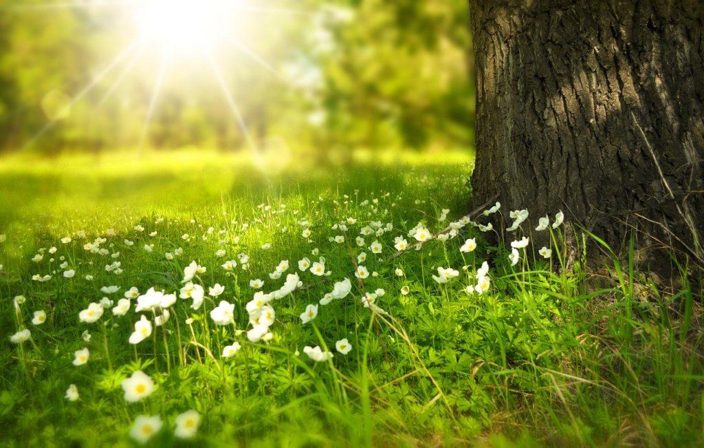 Frühlingsstimmung - Entschlacken und Entgiften im Frühling