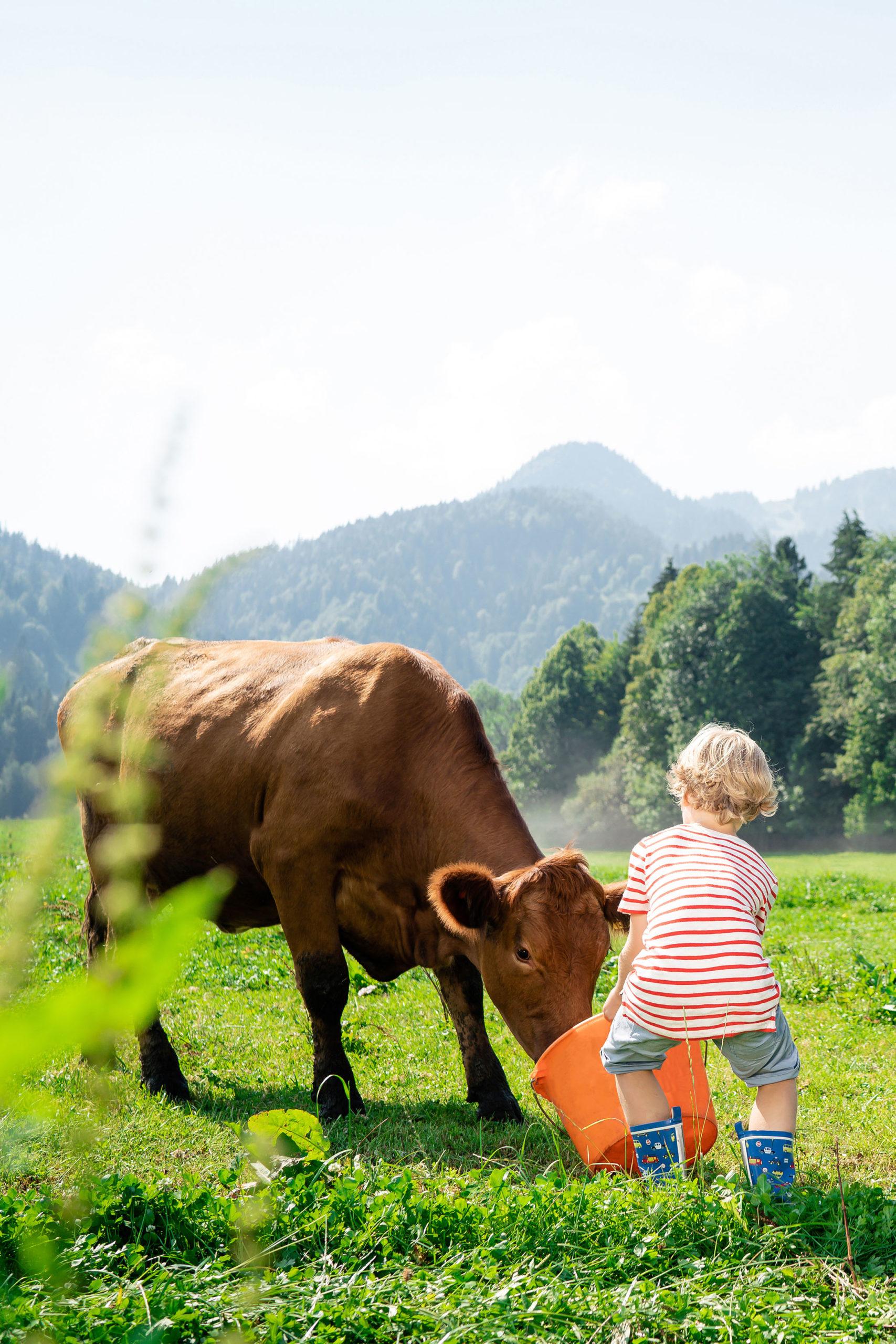 Bauernhof-Effekt durch Kühe